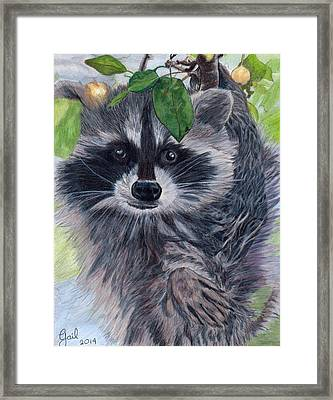 Hi There Framed Print by Gail Seufferlein