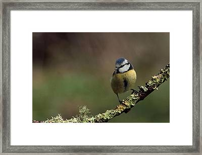Hi There Framed Print by Peter Skelton
