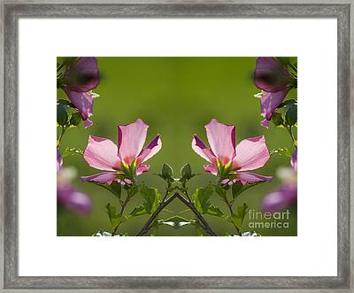 Hibiscus 07 Mirror Image Framed Print by Thomas Woolworth