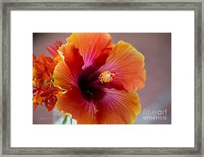 Hibiscus 3 Framed Print