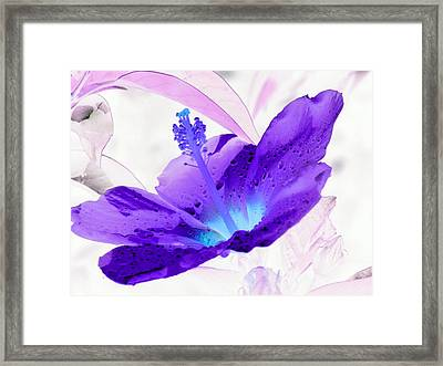 Hibiscus - After The Rain - Photopower 754 Framed Print by Pamela Critchlow