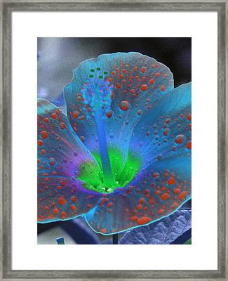 Hibiscus - After The Rain - Photopower 775 Framed Print by Pamela Critchlow
