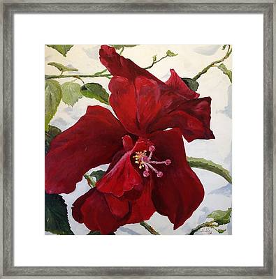 Double Hibiscus Framed Print