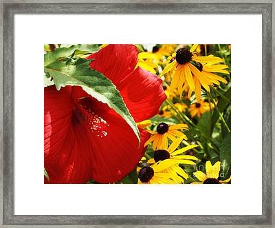 Hibiscus And Black Eyed Susans Framed Print