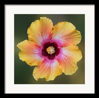 Flower Kaleidoscopes Framed Prints