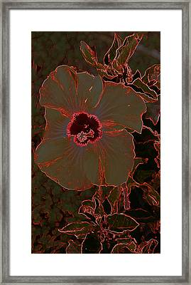 Hibiscus At Play  Framed Print