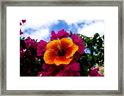 Hibiscus Beauty Framed Print