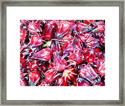 Hibiscus Buds Framed Print by Penny Pesaturo