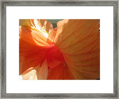 Hibiscus Butterfly Framed Print