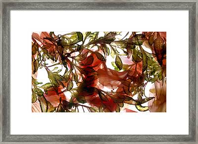 Hibiscus Coleus Array Framed Print by Julia McLemore