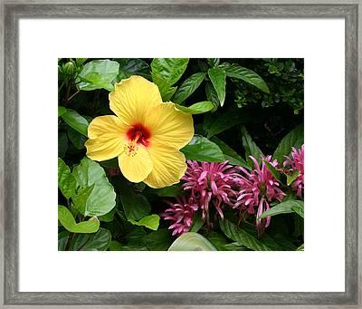 Hibiscus Framed Print by David Lynch