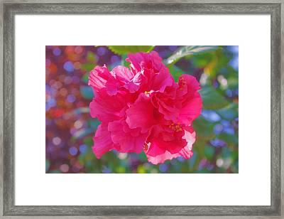 Hibiscus Framed Print
