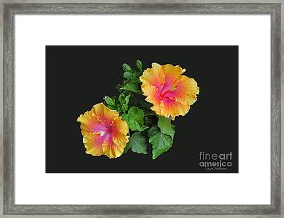 Framed Print featuring the photograph Hibiscus Duo by Susan Wiedmann