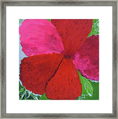 Hibiscus Explosion Framed Print