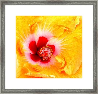 'hibiscus Explosion' Framed Print