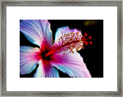 Framed Print featuring the photograph Hibiscus Extending by Joseph Hollingsworth