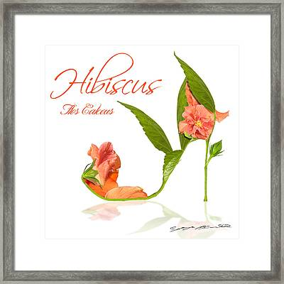 Hibiscus Flos Calceus Framed Print by Blanchette Photography