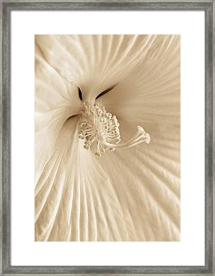 Hibiscus Flower In Sepia Framed Print by Jennie Marie Schell