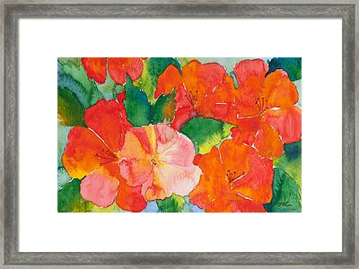 Hibiscus Flowers Framed Print by Michelle Wiarda