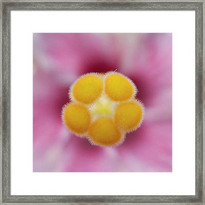 Hibiscus Framed Print by Heiko Koehrer-Wagner