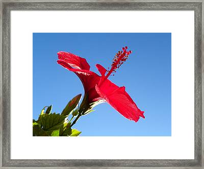 Hibiscus Hope Framed Print by Noreen HaCohen