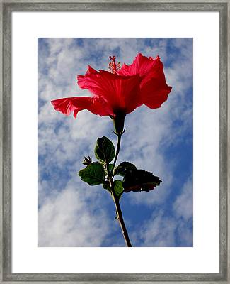 Hibiscus In The Sky Framed Print