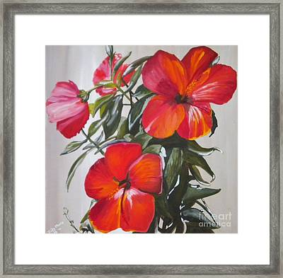 Hibiscus Framed Print by Judy Morris