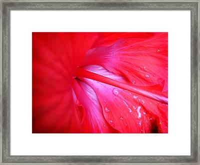 Hibiscus Framed Print by Kara  Stewart