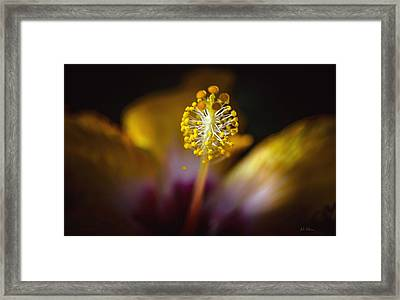 Hibiscus Macro 2 Framed Print by Julie Palencia