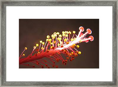 Framed Print featuring the photograph Hibiscus by Mary Ellen Mueller Legault