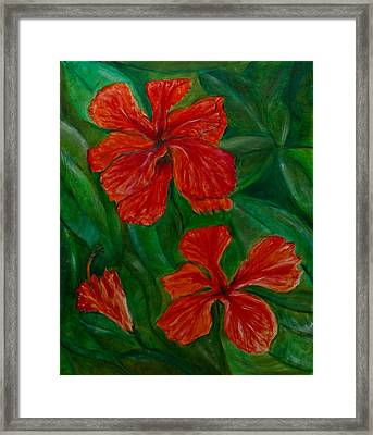 Hibiscus Framed Print by Peter Turner