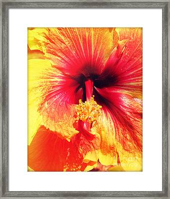 Hibiscus Photography Light Leaks Framed Print by Chris Andruskiewicz