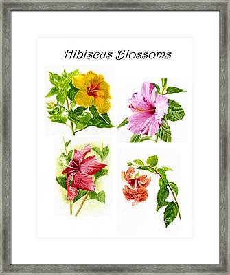 Hibiscus Poster With Script Framed Print by Sharon Freeman
