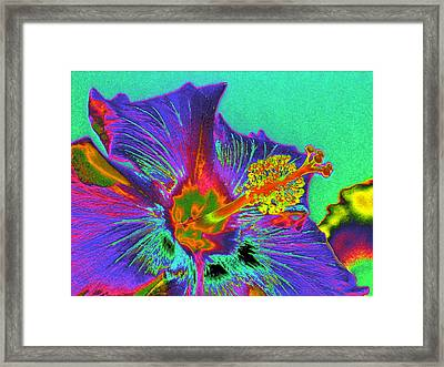 Hibiscus Power Framed Print by Rebecca Flaig