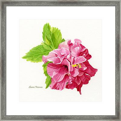 Hibiscus Rosa-sinensis Framed Print by Sharon Freeman