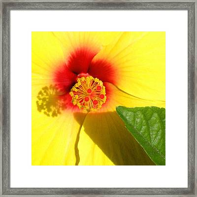 Hibiscus Shadows Framed Print