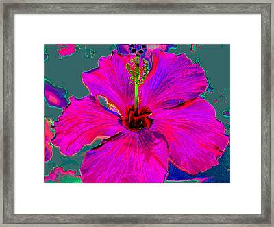Hibiscus Skies Framed Print by Rebecca Flaig
