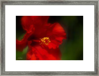 Framed Print featuring the photograph Hibiscus Softly 2 by Travis Burgess