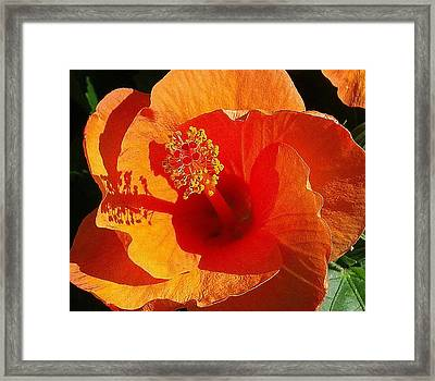 Framed Print featuring the photograph Hibiscus by Suzanne Silvir