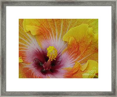 Framed Print featuring the photograph Hibiscus by Tam Ryan