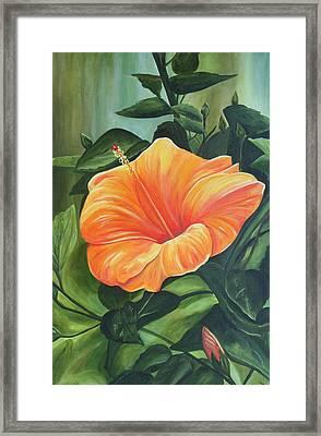 Hibiscus - Tangerine Framed Print by Lyndsey Hatchwell