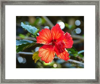 Hibiscus Veins Framed Print
