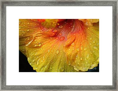 Framed Print featuring the photograph Hibiscus Water Drops by Lisa L Silva