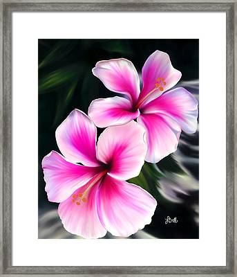 Hibiscuses Framed Print by Laura Bell