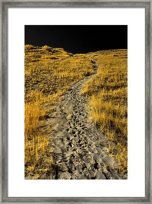 Hidden Beach Dune Path Framed Print