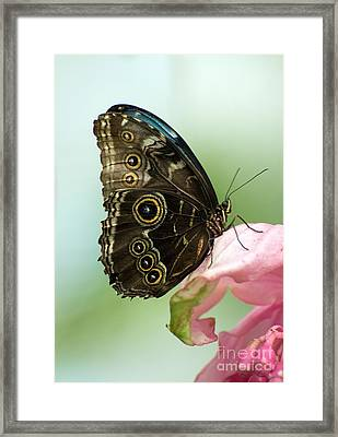 Framed Print featuring the photograph Hidden Beauty Of The Butterfly by Debbie Green
