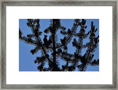 Hidden Bluejay In Silhouette Framed Print by Rich Rauenzahn