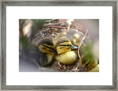 Hidden Framed Print by Deb Halloran