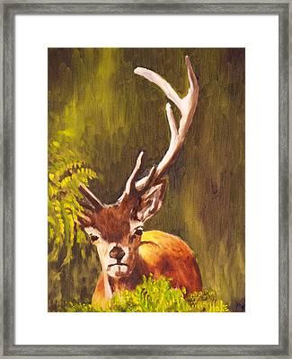Hidden Deer Framed Print