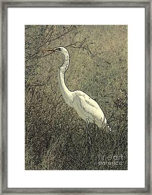 Hidden Egret Framed Print by Carol Groenen